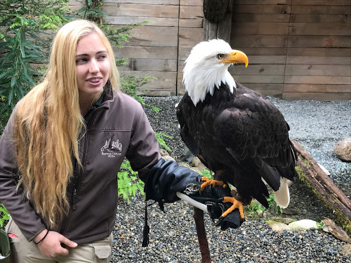 A tour guide with an  eagle on the mend at the Alaska Raptor Center in Sitka, Alaska.