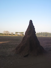 Photo: a huge termite mound