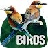 Wallpapers with birds