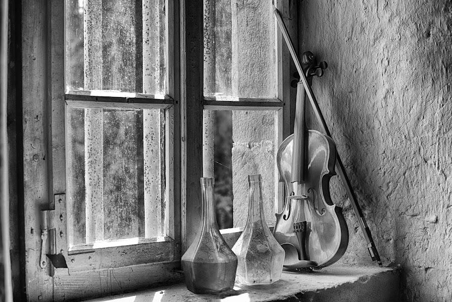 Enjoying The Sunshine At The Window Bench by Marco Bertamé - Black & White Objects & Still Life ( window bench, violin, glass, string, bottles, still life, wood, window, window sill )