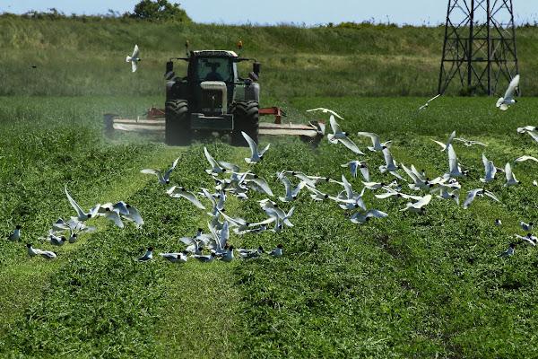 Lavoro agricolo tra uomo e animale  di Bibanto