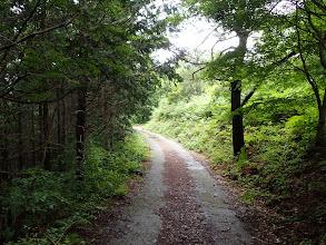 林道を西へ