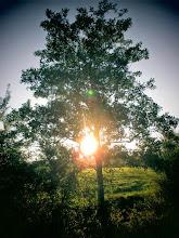 Photo: BauFachForum Ethik:  BauFachForum: Der Baum als Naturprodukt.  Mehr über Geschichte des Bauens: http://www.baufachforum.de/shop/Geschichte-des-Bauens:::951.html