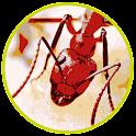 Tap n Crush Ant Smasher Kids icon