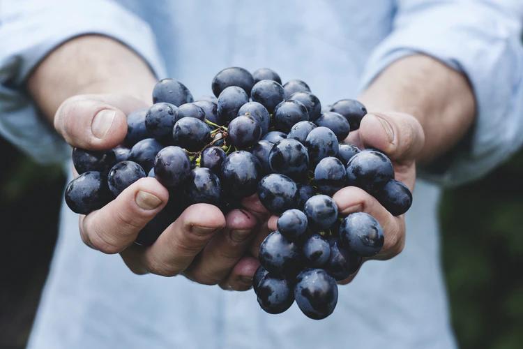Рекомендации новичкам: особенности выращивания винограда