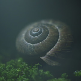 by Indra Fardhani - Nature Up Close Other Natural Objects