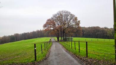 Photo: Die unter Naturschutz stehende Baumgruppe ,Fünf Eichen' am Ruhrhöhenweg Süd beim Café Halle . Am Wegesrand kann man nicht nur eine Pflanzenvielfalt, sondern auch diverse archäologische Hinterlassenschaften finden.