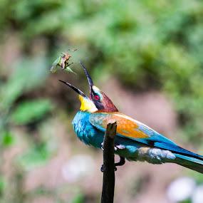 by Ciupe Simona - Animals Birds
