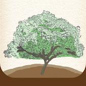 SG Family Tree