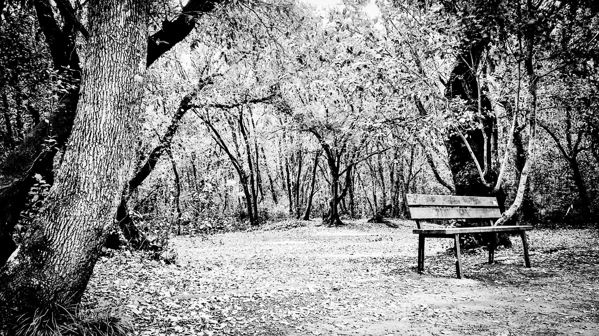 Il dolce silenzio della natura di erpoetametropolitano