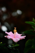 Photo: #flowersphotography  #flowers