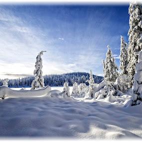 Ringkollen by Svein Hurum - Landscapes Forests ( winter, norway )