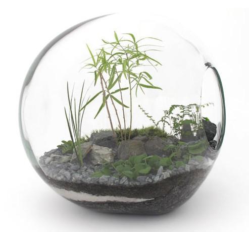 DIY Best Terrarium Ideas Android Apps On Google Play - Amazing diy non living terrarium