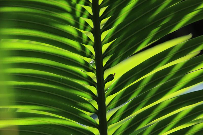 verdi geometrie di Airan