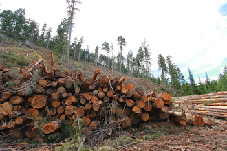 Photo: Huge stack of cut timber in a spotted owl wildlife habitat area on the eastern boundary of Garibaldi Park in the Lillooet Valley, BC.