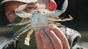 Monster Crabber thumbnail