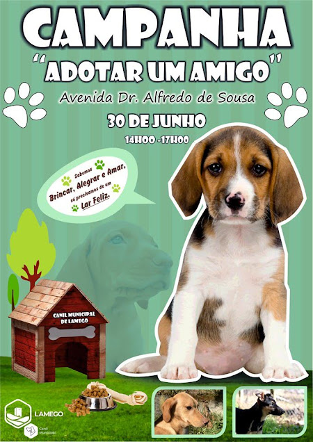 Canil de Lamego promove no domingo campanha de adoção