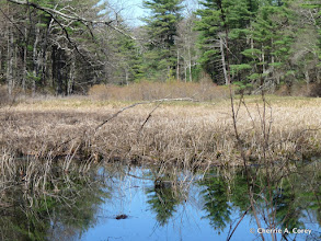 Photo: Middle Andromeda Pond
