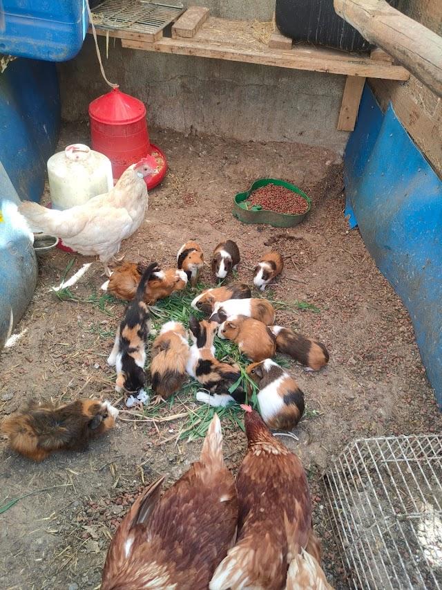 El refugio tiene más de 35 animales.