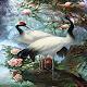 White Birds Live Wallpaper Download for PC Windows 10/8/7