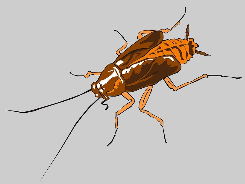 Jak karaluchy trafiają do naszych domów?