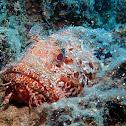 Bigscale scorpionfish