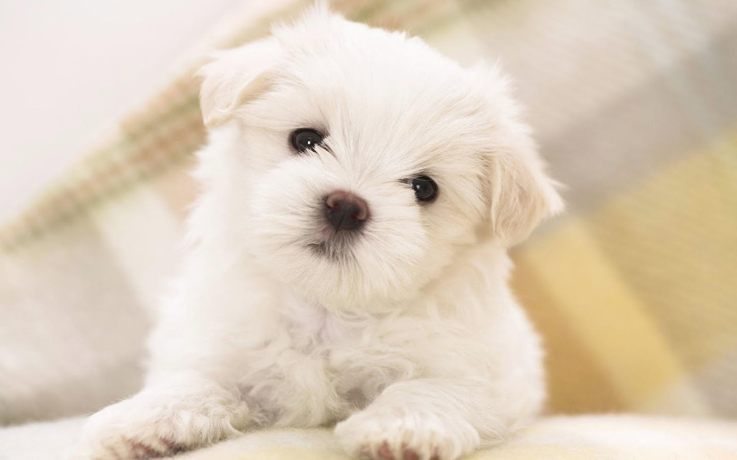 Puppies Live Wallpaper 🐶 Cute Puppy Android Apps on