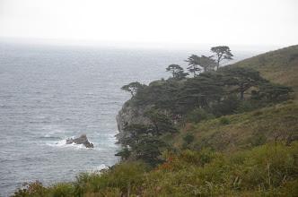 Photo: Pinus x funebris on the rock clifs