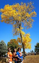 Photo: Chỗ mô có lá vàng là chỗ đó có 3 em!!!