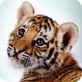 Wild Animals Cub Wallpapers