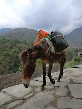Photo: Mules on the trail