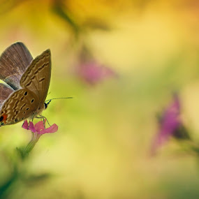 Butterfly by Asep Bowie - Nature Up Close Other Natural Objects ( macro art, butterfly, macro, macro photography, flower )