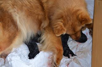 Photo: Nu er der 2 hanner og 2 tæver