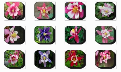 Columbine Flowers Onet Game