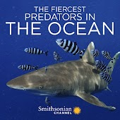 The Fiercest Predators in the Ocean