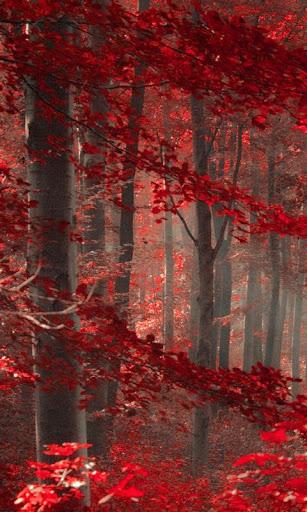 自然森林 lwp