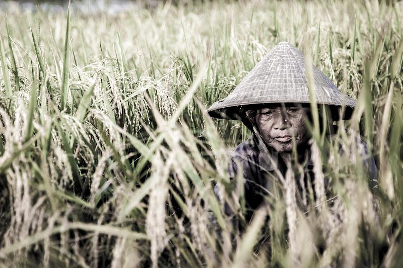 Rice lady di SaraS