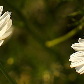 by Dipankar Bose - Nature Up Close Flowers - 2011-2013