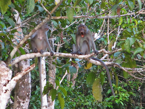 Photo: Macaques everywhere