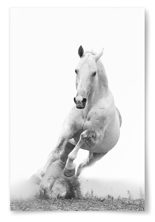 Poster Häst Springande