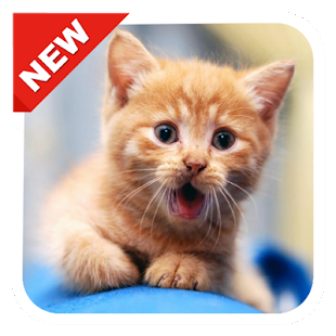 300 cute kitten wallpapers hd android apps on google play 300 cute kitten wallpapers hd screenshot thumbnail thecheapjerseys Choice Image