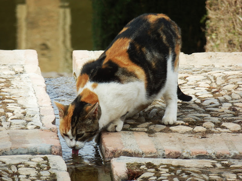 Assetata di MauroV