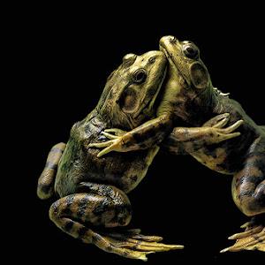 2frogs.jpg