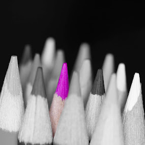 Coloured Pencil by Jan Crawford - Artistic Objects Other Objects ( abstract, coloured, black and white, pink, pencils,  )