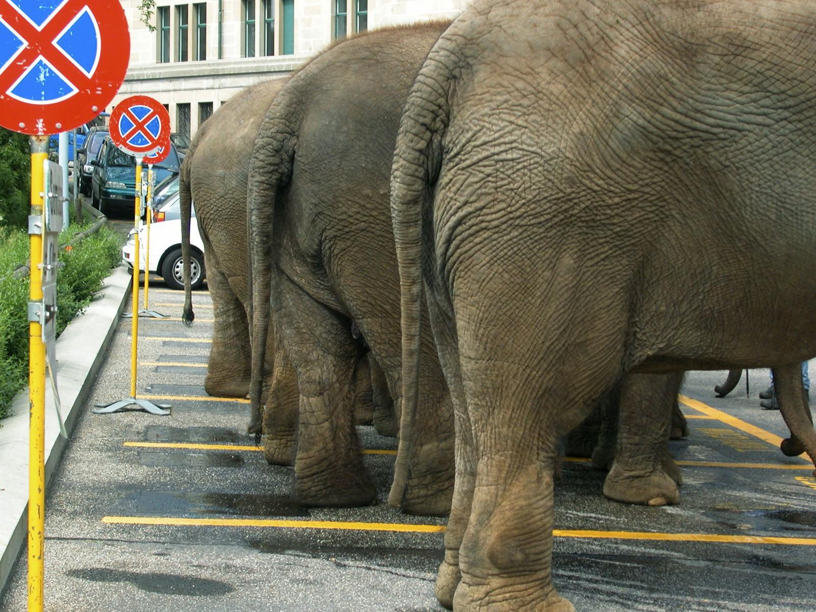 C:\Documents and Settings\Пользователь\Рабочий стол\ЗАКОНОДАВСТВО\Animals___Elephants_Elephants_in_the_Parking_lot_081675_.jpg