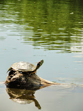 Photo: Happy turtle in the sun at Cox Arboretum in Dayton, Ohio.