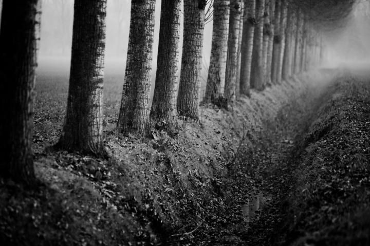 L'autunno e le morte stagioni.. di Paolo Sartorio