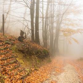 Autumn. by Darijan Mihajlovic - Landscapes Forests