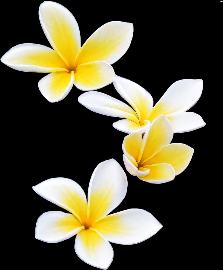 by M & D Photography - Nature Up Close Flowers - 2011-2013 (  )