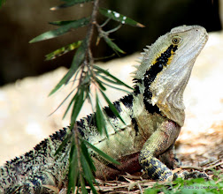 Photo: Year 2 Day 183 - Love This Water Dragon